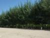 Amphur beach