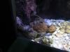 Mořské akvárium u Rayongu