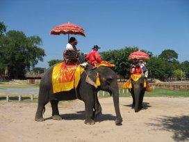 Ayuthaya - jízda na slonech