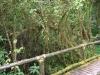 Naučná stezka mlžným pralesem, Doi Inthanon