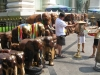 Sochy slonů, Erawan Shrine