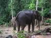 Ko Chang - sloní camp