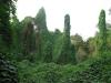 Vnitrozemí ostrova Ko Samet je porostlé bujnou vegetací
