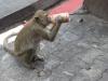 Lop Buri - opičí kolonie