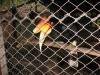 Expozice ptáků, Phitsanulok
