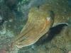podmořský život v okolí Phuketu