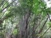 Cesta bambusovým pralesem v národním parku Sai Yok