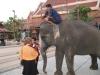 Siam Niramit - Bez slonů by to nebylo ono
