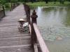 Rybářka, Sukhothai