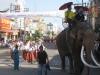 Sloni se střídají s kapelami