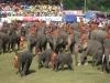 Začíná velká sloní show