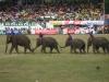 Pochod slonů