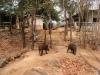 V Tygřím chrámu potkáte i jiná zvířata