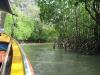 Plavba mezi mangrovníky v ústí řeky (záliv Phang Nga)
